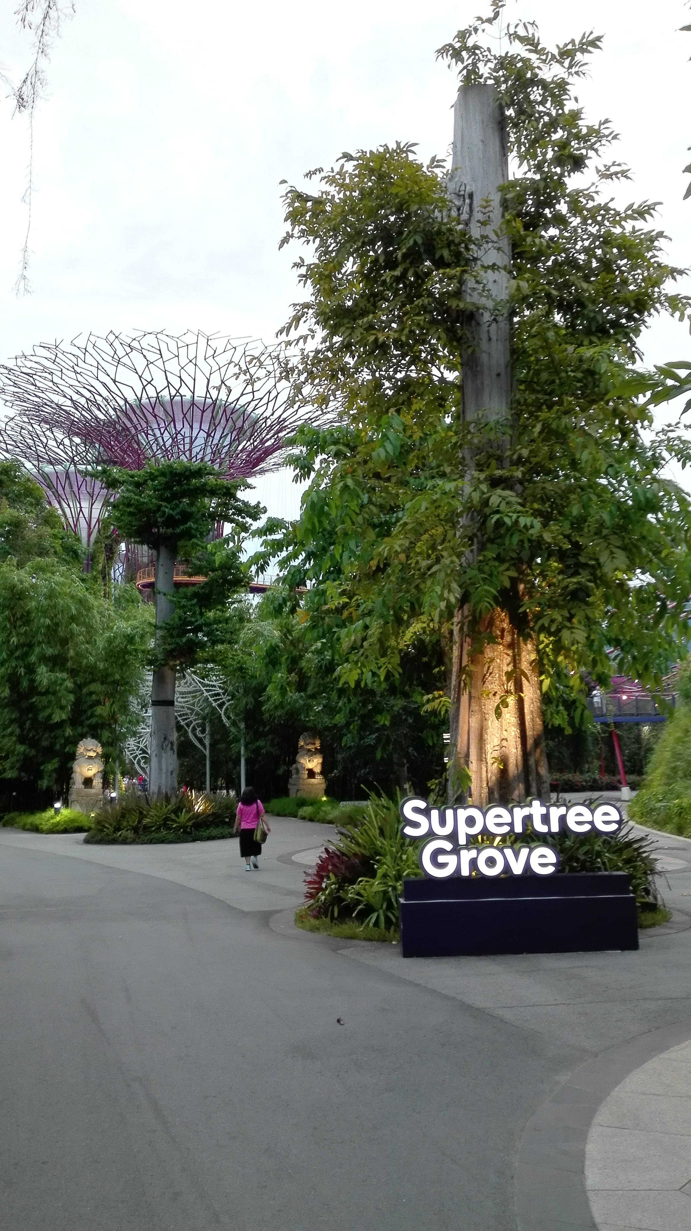 Supertree Groove